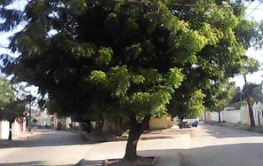 Prefeitura de Arapiraca revitaliza praça da rua São João